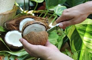 Dschungel-Incentives in der Biosphäre Potsdam 2