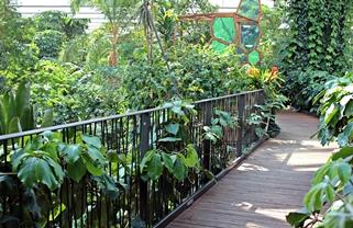Dschungel-Incentives in der Biosphäre Potsdam 5